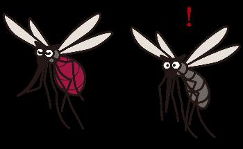 虫刺され(蚊・ブヨ)の違い!知らないとヤバイ状態に!?