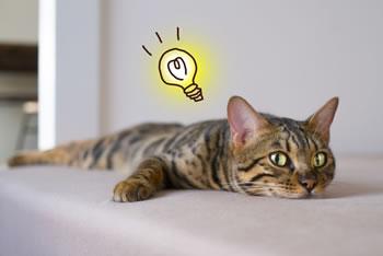 2月22日は『猫の日』!その由来とは?「世界猫の日」って?