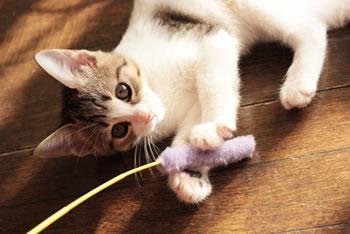 日本の猫の日の由来と、世界の猫の日との関係は?